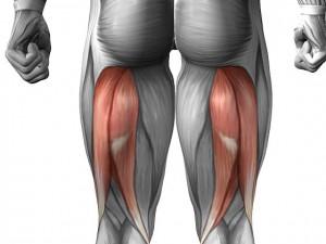 biceps-bedra_0